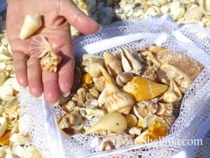 seashell collection on the beach