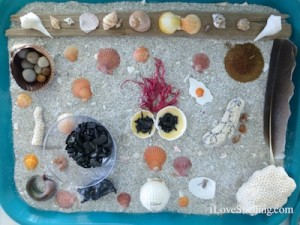 seashells beach bling iLoveShelling