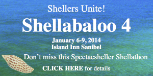shellabaloo 4 shell trip