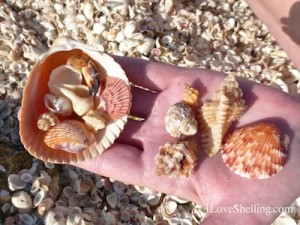 shells beach bling blind pass captiva