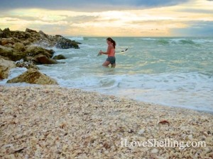 susan shelling captiva beach of seashells