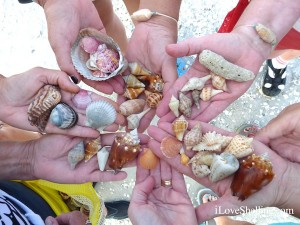 favorite shells from sanibel