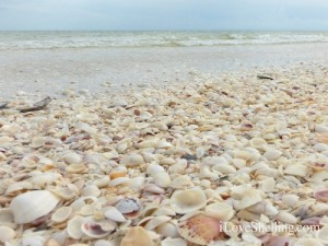 gulf side city park sanibel shell beach