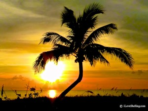 palm tree in yellow sunset