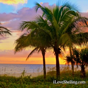 palm trees on the beach at sunset sanibel