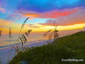 sanibel sunset with sea oats