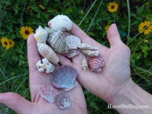 seashells and sun flowers