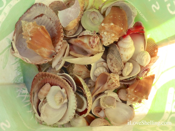 Breakfast of Shelling Champions