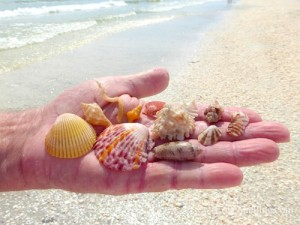 shell collecting sanibel gulf side city park october