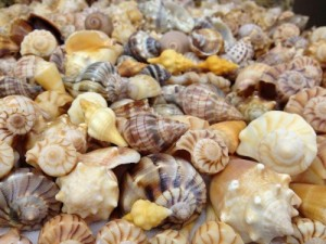 shell collection gerry captiva florida october