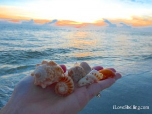 shells at sunset sanibel