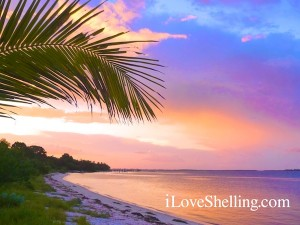 sunsets of sanibel in paradise