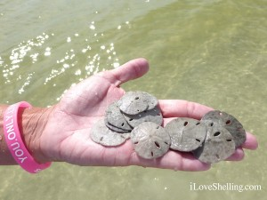 you only live once to find tiny sand dollars