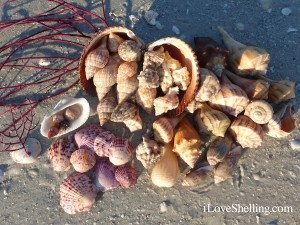 SEASHELLS sea shells