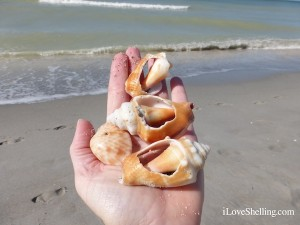 broken seashells for art craft projects