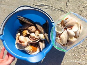 bucket full of sanibel shells