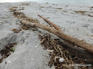 drift wood in high tide wrack line