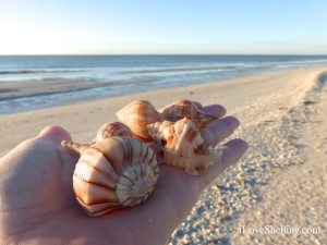 seashells on the beach of sanibel