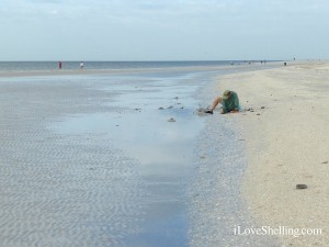 low tide shelling on sanibel