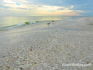 sanibel lighthouse beach shells birds