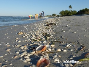 seashell wrack blind pass sanibel
