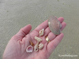 seashells and coral from sanibel lighthouse