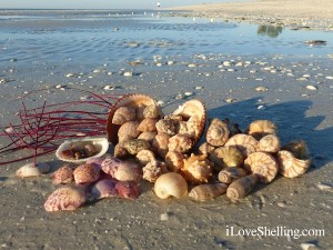 seashells at low tide sanibel island florida