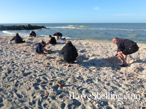 sit n sift shell pile turner beach captiva florida