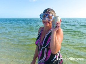 Nancy snorkels find whelk cayo costa florida