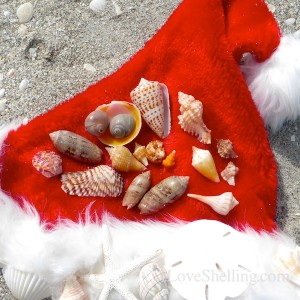 christmas seashells from santa