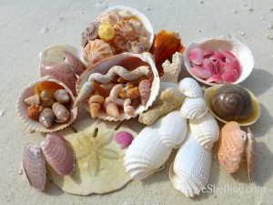 collect shells bonita beach florida lovers key park
