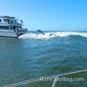 dolphin watching fort myers beach florida