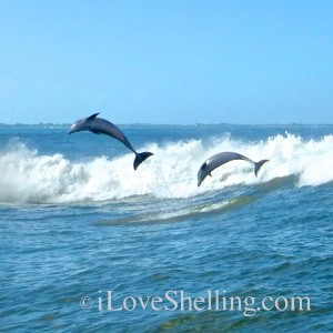 dolphins jumping for myers beach florida