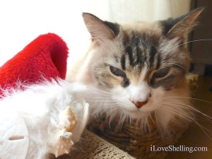 dustie christmas kitty