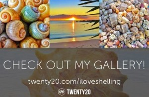gallery-check-out-iloveshelling