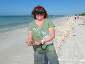 julie ohio finds seashells cayo costa florida