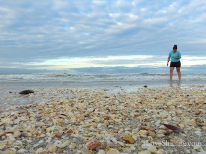 melissa shelling sanibel negative low tide