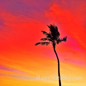 one palm painting a red sky