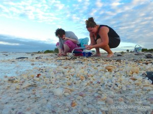 sanibel shellers collecting seashells