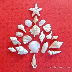 seashell christmas tree on red