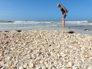 seashells on the seashore of sanibel