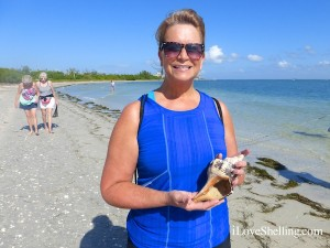 wendy ohio horse conch found cayo costa florida