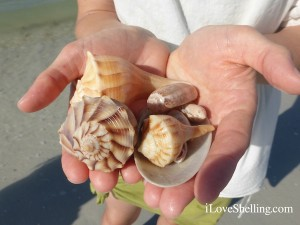 whelks found boating Cayo Costa florida