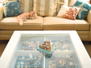 Pam's shell display table with kitty