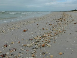 a beach filled with shells