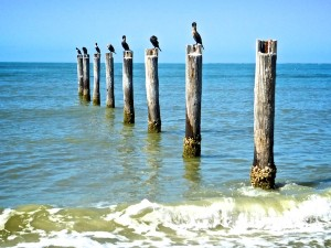 birds on piling fort myers beach florida