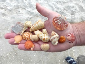 clark shells bp sanibel after beach renourishmnet