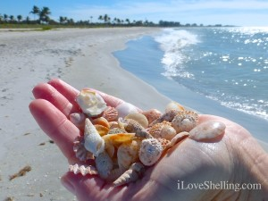 handful of seashells south seas resort captiva