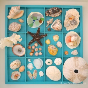 home display of shells from cat island bahamas