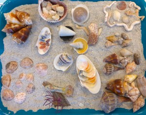 kris sea shell display shellabaloo 4